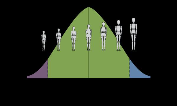 Ergoman Diagram Height